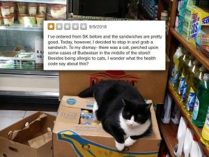 woman-calls-out-bodega-cat-in-yelp-review-internet-owns-her-8-photos-2